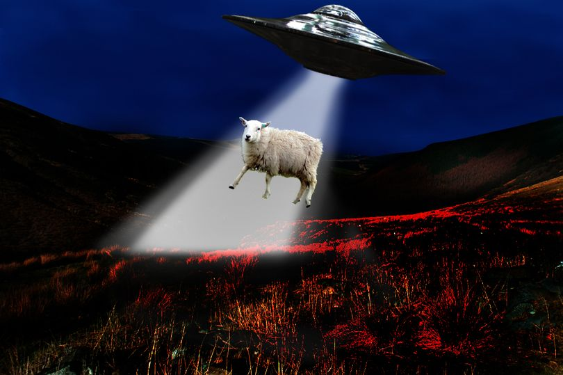 Sheep abducted by UFO